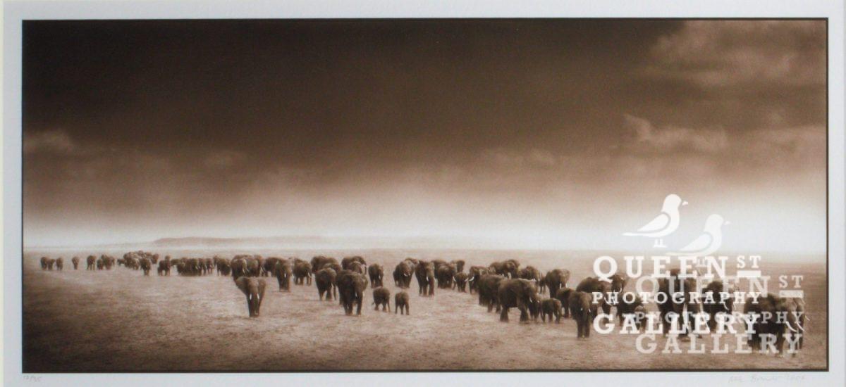Nick Brandt Elephant Exodus Queen Street Photography Gallery